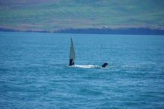 Φάλαινα της Ισλανδίας humpback στοκ φωτογραφία με δικαίωμα ελεύθερης χρήσης