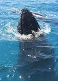 φάλαινα Στοκ Φωτογραφίες