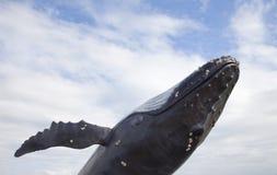 Φάλαινα Humpback με το μπλε ουρανό στοκ φωτογραφία με δικαίωμα ελεύθερης χρήσης