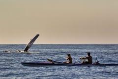 Φάλαινα Humpback που κυματίζει στα kayakers που ήταν nera Lahaina προσοχής φαλαινών σε Mau στοκ εικόνες