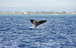 φάλαινα waikiki στοκ εικόνα