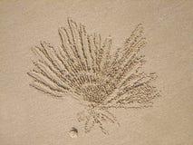φάντασμα καβουριών ceratophthalma ocypode Στοκ εικόνα με δικαίωμα ελεύθερης χρήσης