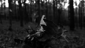 φάντασμα Στοκ Φωτογραφία