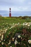 Φάρος και λουλούδια Slettnes Στοκ εικόνα με δικαίωμα ελεύθερης χρήσης