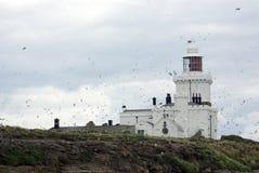 Φάρος νησιών Coquet Στοκ εικόνα με δικαίωμα ελεύθερης χρήσης