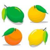 Φάτε τα φρέσκα εσπεριδοειδή απεικόνιση αποθεμάτων