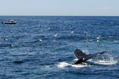Φάλαινα και βάρκα Στοκ Εικόνα