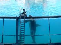 Φάλαινα δολοφόνων και ένα άτομο από κοινού Στοκ φωτογραφία με δικαίωμα ελεύθερης χρήσης