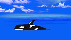 Φάλαινα δολοφόνων στο νερό ελεύθερη απεικόνιση δικαιώματος