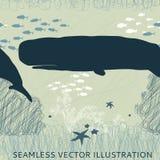 Φάλαινα σπέρματος άνευ ραφής Στοκ Φωτογραφία