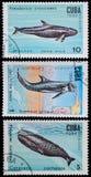 Φάλαινα σπέρματος Στοκ Εικόνες