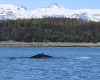 Φάλαινα Humpback με τα βουνά Στοκ Εικόνα