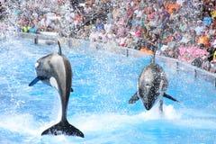 Φάλαινες δολοφόνων Στοκ φωτογραφίες με δικαίωμα ελεύθερης χρήσης