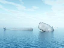 Φάλαινες σπέρματος Στοκ φωτογραφία με δικαίωμα ελεύθερης χρήσης