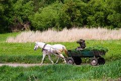 Φέρνοντας συγκομιδή σανού κάρρων αλόγων στον αγροτικό δρόμο Στοκ εικόνες με δικαίωμα ελεύθερης χρήσης