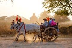 Φέρνοντας τουρίστες κάρρων βοδιών σε Bagan, το Μιανμάρ Στοκ φωτογραφία με δικαίωμα ελεύθερης χρήσης