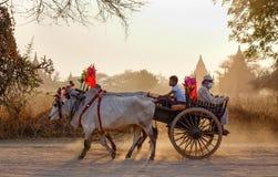 Φέρνοντας τουρίστες κάρρων βοδιών στο δρόμο σε Innwa, το Μιανμάρ Στοκ φωτογραφίες με δικαίωμα ελεύθερης χρήσης