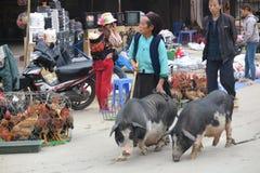 Φέρνοντας χοίροι γυναικών στην αγορά σε Meo Vac, βόρειο Βιετνάμ Στοκ Εικόνες