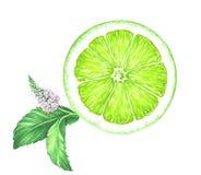 Φέτα ασβέστη Watercolor με τη μέντα που απομονώνεται στο άσπρο υπόβαθρο στοκ εικόνα