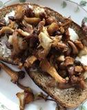 Φέτα του ψωμιού με chanterelle Στοκ φωτογραφίες με δικαίωμα ελεύθερης χρήσης