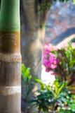 φέτα φοινικών Στοκ φωτογραφία με δικαίωμα ελεύθερης χρήσης