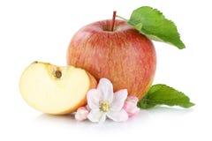 Φέτα φρούτων της Apple που τεμαχίζεται που απομονώνεται στο λευκό Στοκ Εικόνες