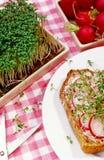 Φέτα ψωμιού με το ραδίκι Στοκ φωτογραφία με δικαίωμα ελεύθερης χρήσης