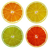 Φέτες του πορτοκαλιών, ρόδινων γκρέιπφρουτ, του ασβέστη και του λεμονιού που απομονώνονται στο άσπρο υπόβαθρο Στοκ φωτογραφία με δικαίωμα ελεύθερης χρήσης