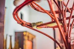 Φίδι στον κλάδο στο ναό φιδιών σε Penang, Μαλαισία Στοκ Φωτογραφία