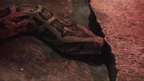 Φίδι στο πάτωμα απόθεμα βίντεο