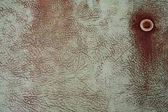 φίμπεργκλας Στοκ Εικόνα