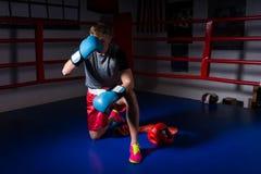 Φίλαθλος αρσενικός μπόξερ στις στάσεις εγκιβωτίζοντας γαντιών σε ένα γόνατο σε κανονικό Στοκ φωτογραφία με δικαίωμα ελεύθερης χρήσης