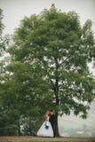 Φίλημα γαμήλιων ζευγών κάτω από το δέντρο Στοκ φωτογραφία με δικαίωμα ελεύθερης χρήσης