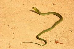 Φίδι δέντρων Στοκ φωτογραφία με δικαίωμα ελεύθερης χρήσης