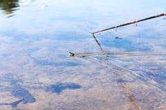 Φίδι και ψαράς Στοκ φωτογραφίες με δικαίωμα ελεύθερης χρήσης