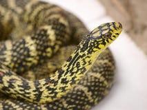 Φίδι νερού Στοκ Φωτογραφία