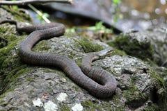 Φίδι στη φύση στοκ εικόνες με δικαίωμα ελεύθερης χρήσης