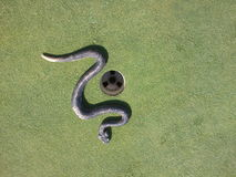 Φίδι στο πράσινο Στοκ φωτογραφίες με δικαίωμα ελεύθερης χρήσης