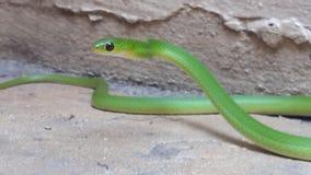 Φίδι Στοκ φωτογραφίες με δικαίωμα ελεύθερης χρήσης