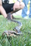 Φίδι Στοκ Εικόνα