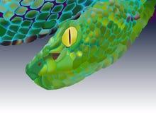 φίδι Στοκ Φωτογραφία