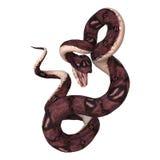 Φίδι Anaconda στο λευκό Στοκ Φωτογραφίες