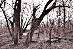 Φίλοι δέντρων Στοκ Φωτογραφία