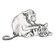 Φίλοι - ο πίθηκος και η γάτα Στοκ Φωτογραφία