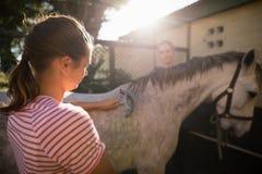 Φίλοι που καθαρίζουν το άλογο στη σιταποθήκη κατά τη διάρκεια της ηλιόλουστης ημέρας Στοκ φωτογραφία με δικαίωμα ελεύθερης χρήσης