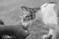 Φίλος γατών Στοκ εικόνα με δικαίωμα ελεύθερης χρήσης