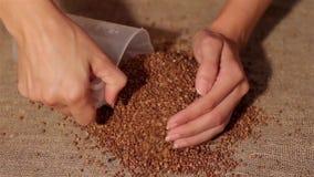 Φαγόπυρο που συλλέγει burlap συγκομιδή συλλογή των χεριών απόθεμα βίντεο