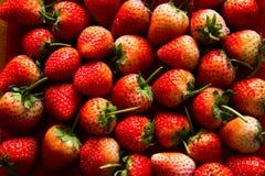 Φαγώσιμος νόστιμος yummy φραουλών Στοκ Εικόνες