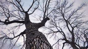 Φαλακρά δέντρα κατά τη διάρκεια Wintertime στοκ εικόνα