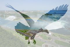 Φαλακρός αετός στο υπόβαθρο πτώσεων Niagara στοκ εικόνες